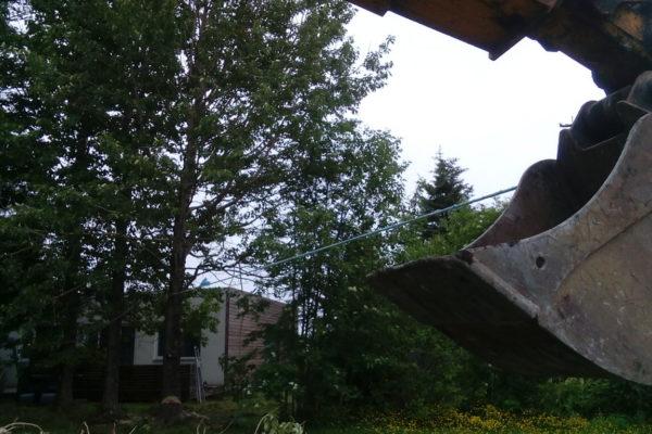 trjafellingar (4)